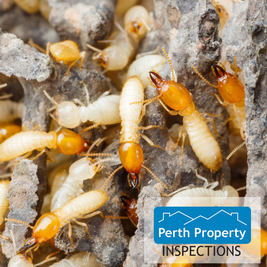 termite inspections perth